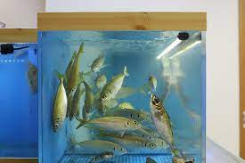 活魚水槽・生け簀の販売・通販 – 活魚水槽、生け簀の製作専門業者 東京水槽製作所